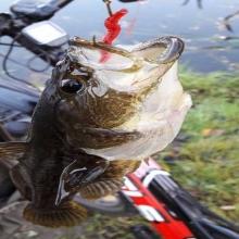 Leurres de pêche Vers Silicone Souple